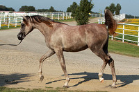 EF1G3792_2010-Source-filly-