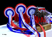 2010 Salon Du Cheval - Most Beautiful Head & Special Trophy winners