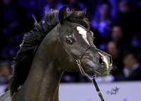 2010 Salon Du Cheval - Jr. Stallions